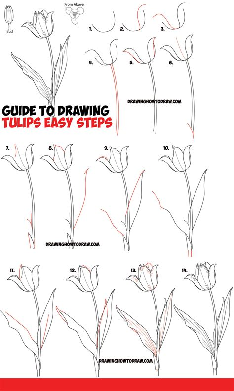 How to draw a tulip Step by step Drawing tutorials