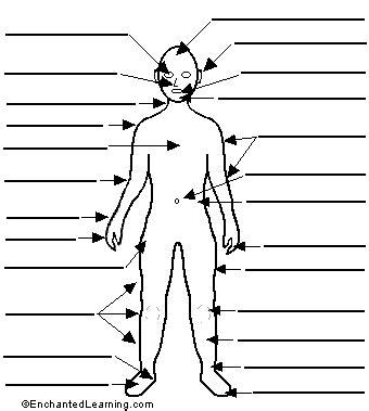 Human Anatomy Label Me Printouts EnchantedLearning