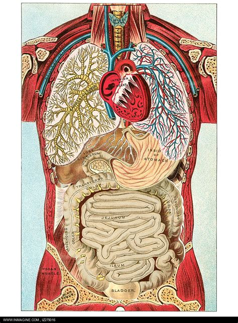 Human Anatomy and Physiology lrn