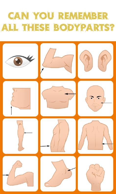 Human Body Concentration Game Memory Match