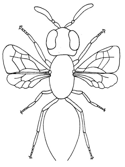 Insect Coloring Pages Free and Printable