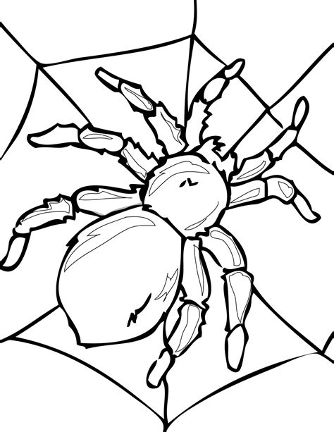 Insects and Spiders Bugs Coloring Pages Posters and