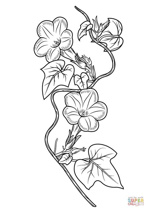 Ivy leaf Morning Glory coloring page Free Printable