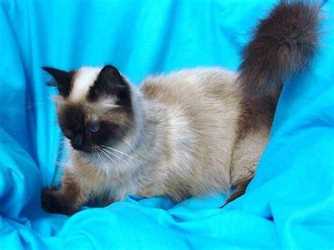 Jamestown Pets For Sale Topix