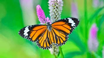 Jigsaw Puzzles PrimaryGames