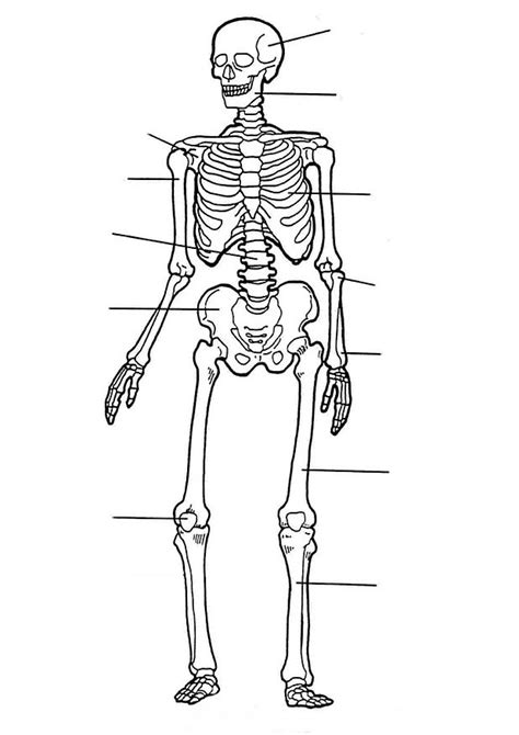 Kids n fun 17 coloring pages of Human body