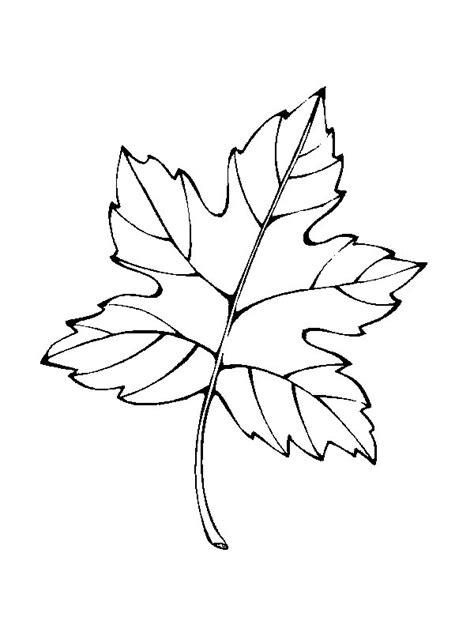 Kids n fun 39 coloring pages of Leaves
