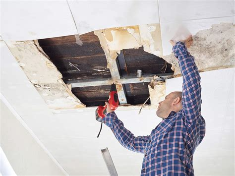 Kill Mold on Drywall Wood Carpet and Tiles moldpedia