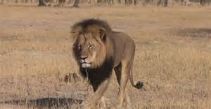 Killer of Cecil the Lion Finds Out That He Is a Target Now