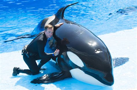 Killer whale kills trainer at Orlando s Sea World whale