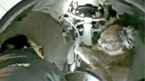 Koala survives 10 mile ride clinging to four wheel drive