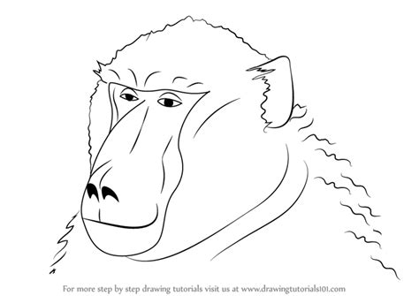 Learn How to Draw a Baboon Face Wild Animals Step by