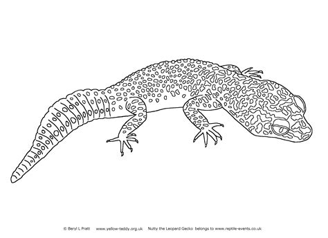 Leopard Gecko Coloring Pages apexis