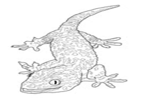 Leopard Gecko Coloring Pages iesltd