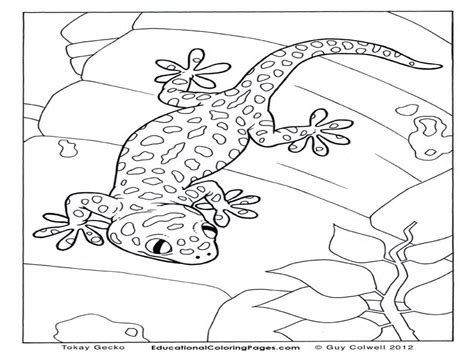 Leopard Gecko coloring page Free Printable Coloring Pages