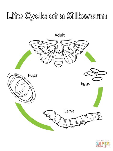 Life Cycle of a Silkworm coloring page Free Printable