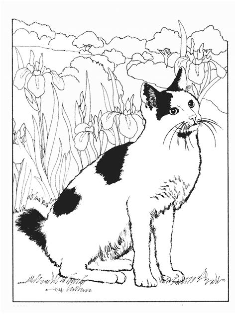 List of Cat pictures coloring