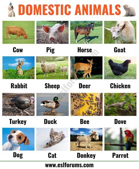List of domesticated animals Wikipedia