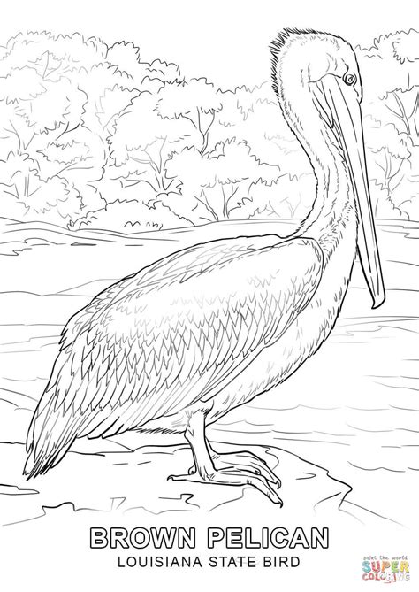 Louisiana State Bird coloring page Free Printable