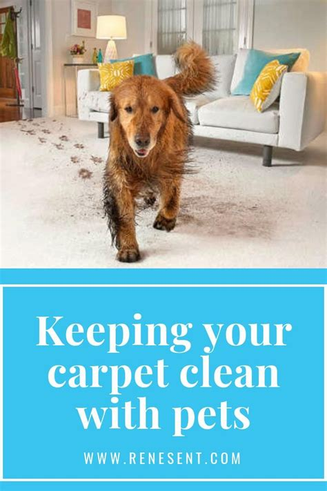 MORE How to Keep Carpet Clean in a Pet Friendly Home