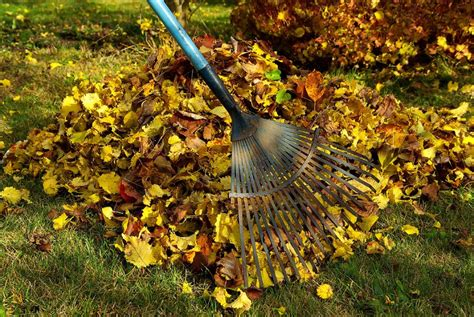 Maid 4 You Molly Maid House Cleaning in Costa Mesa