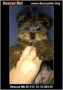 Maryland Yorkie Rescue ADOPTIONS RescueMe Org