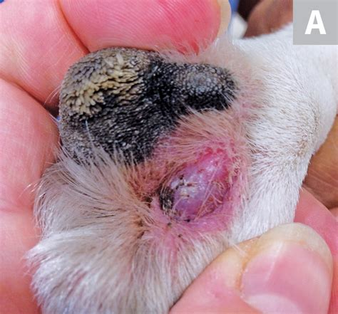 Mast Cell Tumor A Common Form of Cancer in Dogs and Cats