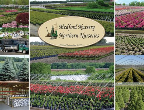 Medford Nursery Northern Nurseries Wholesale Horticultural