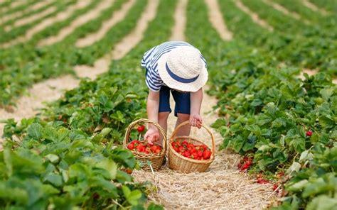 Michigan Michigan U Pick farms Find a pick your own farm