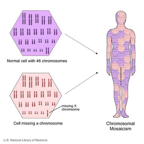 Mosaic genetics Wikipedia