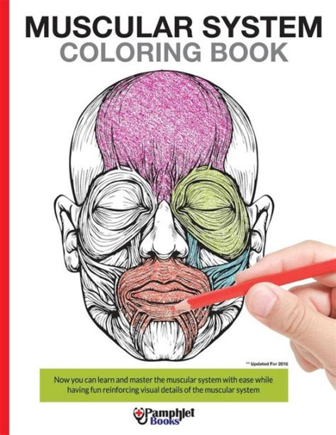 Muscular System Coloring Book Now you can learn and