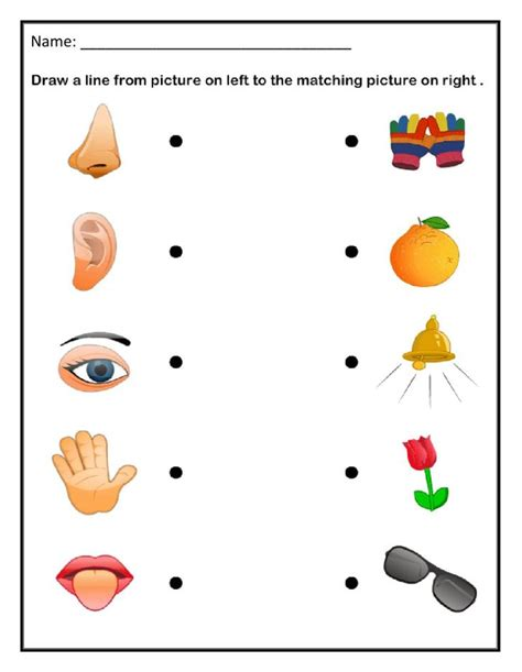 My Five Senses Match Up Worksheet Education