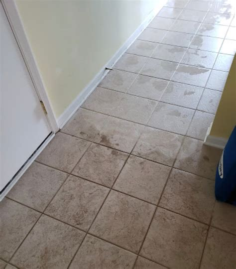 Nature s Way Carpet Cleaning Waterford MI