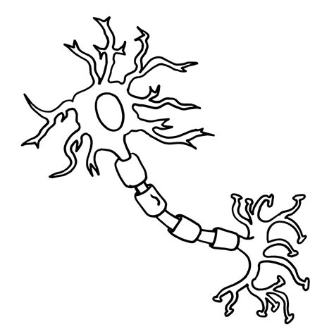 Neuron Clipart Coloring Worksheets