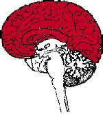 Neuroscience For Kids Explore the nervous system