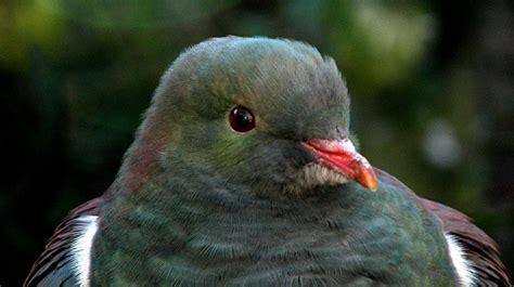 New Zealand native animals Conservation