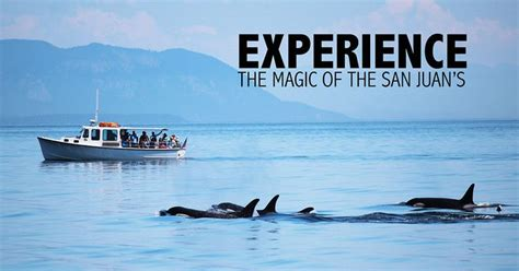 Orcas Island Whale Watching Deer Harbor Charters Since 1988