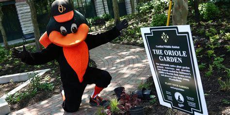 Oriole Garden to attract birds to ballpark MLB