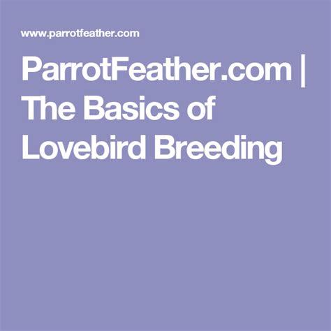 ParrotFeather The Basics of Lovebird Breeding
