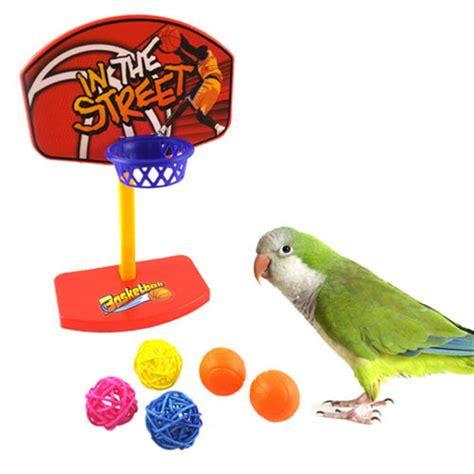 Parrots Company Pet Birds Pet Bird Supplies