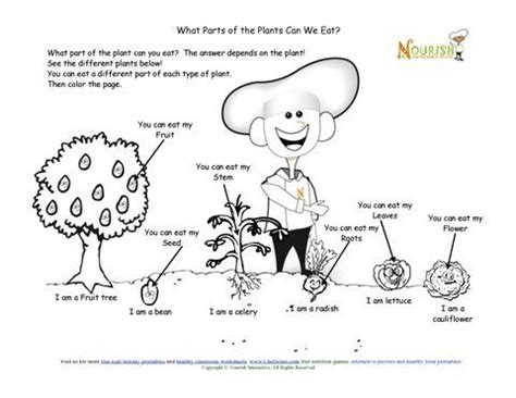 Parts Of The Plant You Can Eat Coloring Page