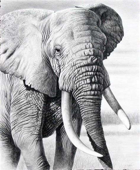 Pencil portraits pencil drawings of people and animals