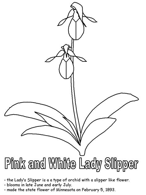 Pink and white Ladys Slipper coloring page Free