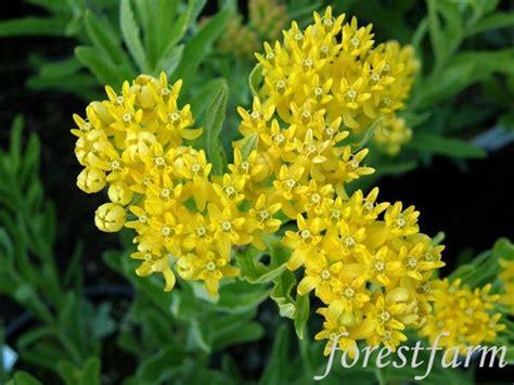 Plant Nursery Oregon Forestfarm