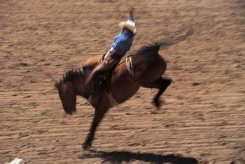 Planting Directions for Blue Rug Juniper Home Guides