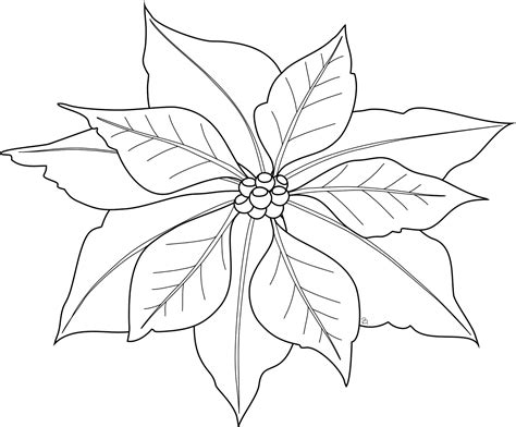 Poinsettia coloring pages Free Coloring Pages