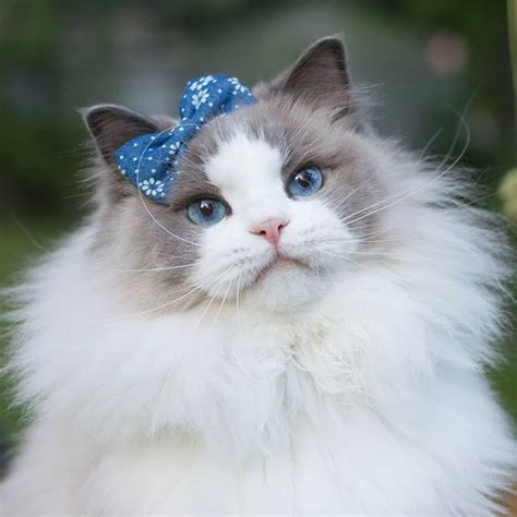 Princess Aurora aurorapurr Instagram photos and videos