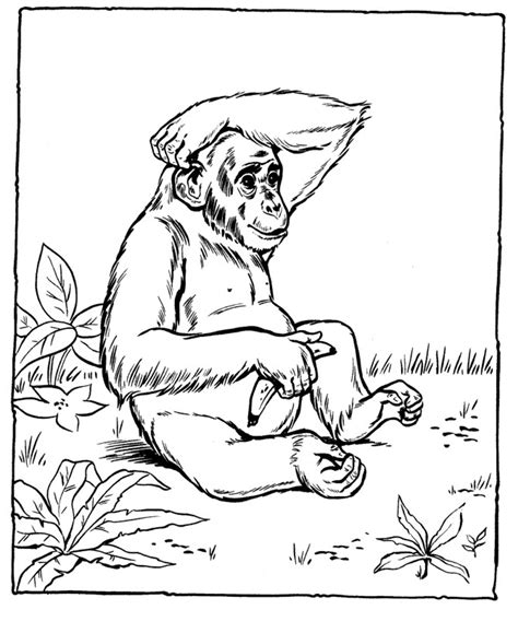 Printable Coloring Pages for Kids Animals Sports