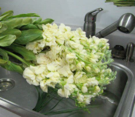 Processing Flowers Correctly Wholesale Flowers and