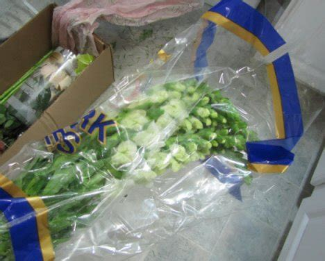 Processing Fresh Flowers Wholesale Flowers and